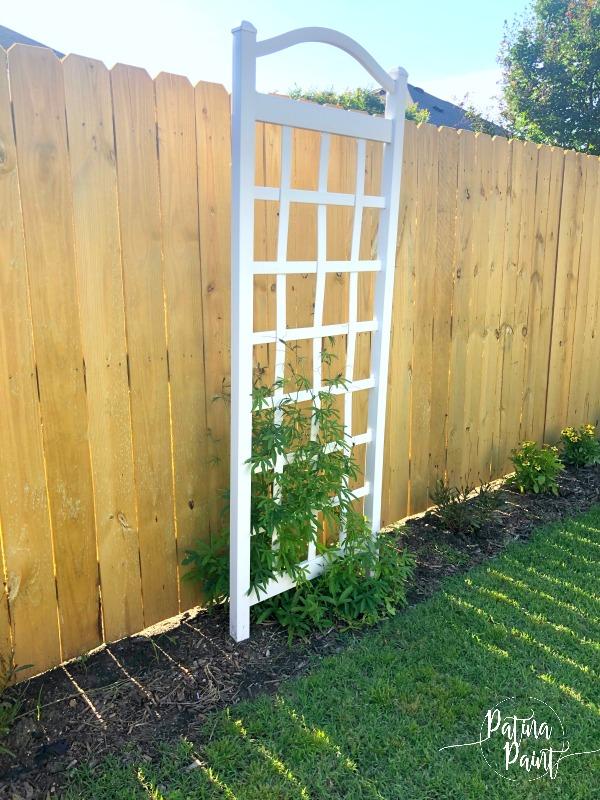 trellis, fence